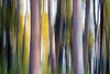 Kittitas, Cle Elum - Two large tree trunks, icm 2