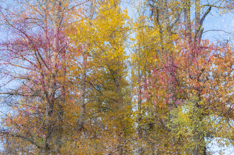 Easton, Pond - In-camera double exposure of colorful brush against tall trees