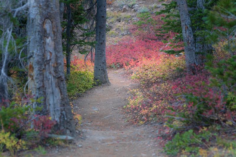 Stuart, Ingalls - Colorful foliage on trail to Ingalls Pass
