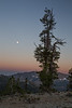 Kittitas, Bean Creek - Super moon setting just before sunrise with solitary tree