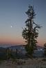 Kittitas, Bean Creek - Super moon setting just before sunrise with solitary tree
