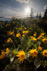 Kittitas, Kachess Beacon - Setting sun over some wildflowers