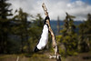 Kittitas, Mt. Baldy - Lost mask hanging from stick on side of trail
