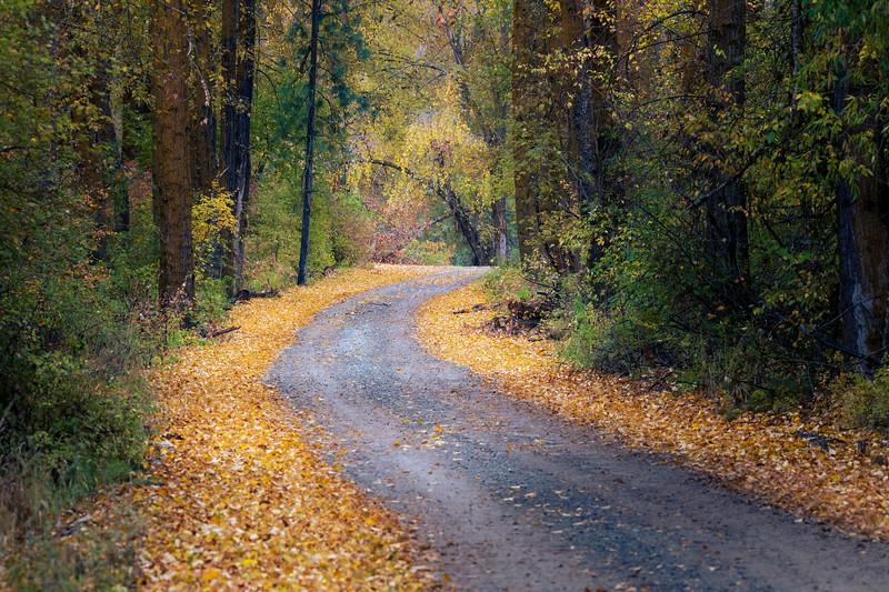 Kittitas, Cle Elum - Bend in dirt road leading towards leaning tree