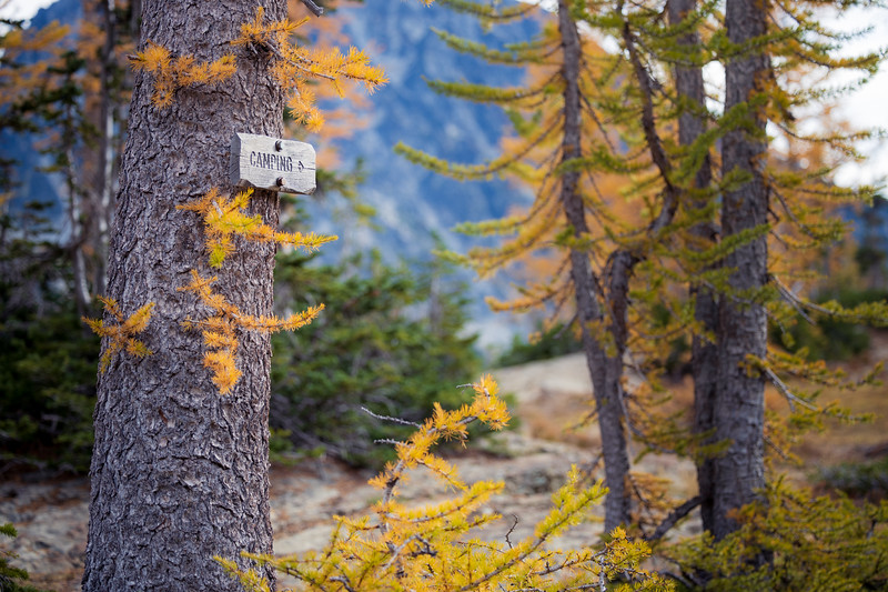 Stuart, Ingalls - Camping sign attached to larch tree