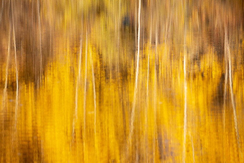 Easton, Pond - Abstract of reflection of yellow and tree trunks in lake