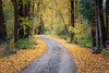 Kittitas, Cle Elum - Dirt road with fallen leaves winding through tall trees