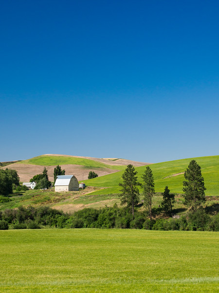 Palouse, Farm - Farm in a green field on a blue day