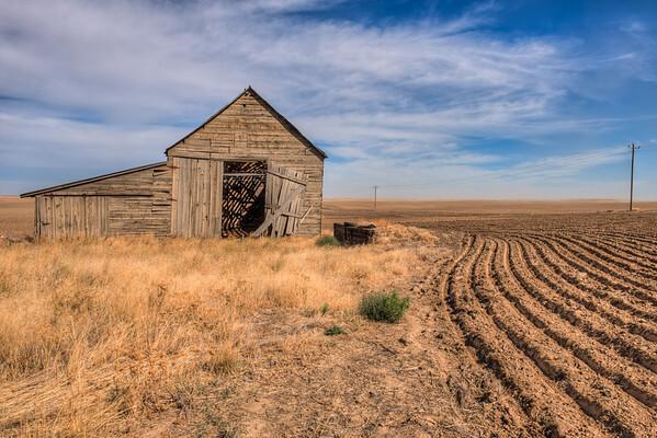 Barn Seed Rows