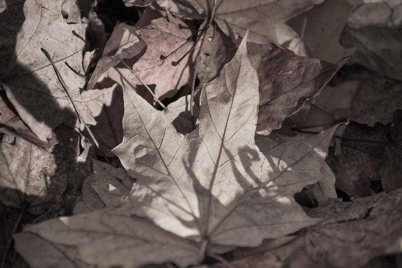 Fall at the Washington Park Arboretum