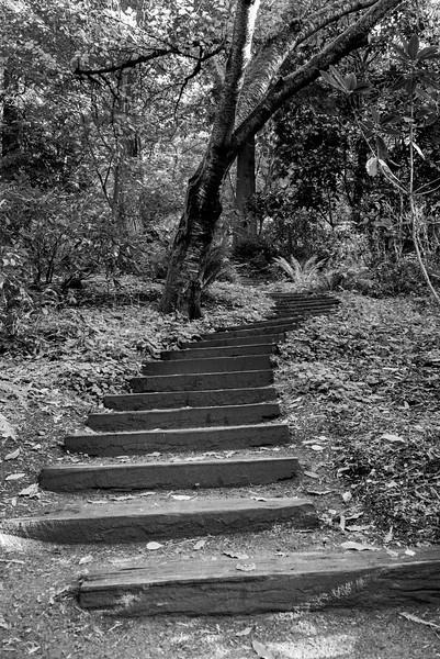 Wood steps at the Washington Park Arboretum