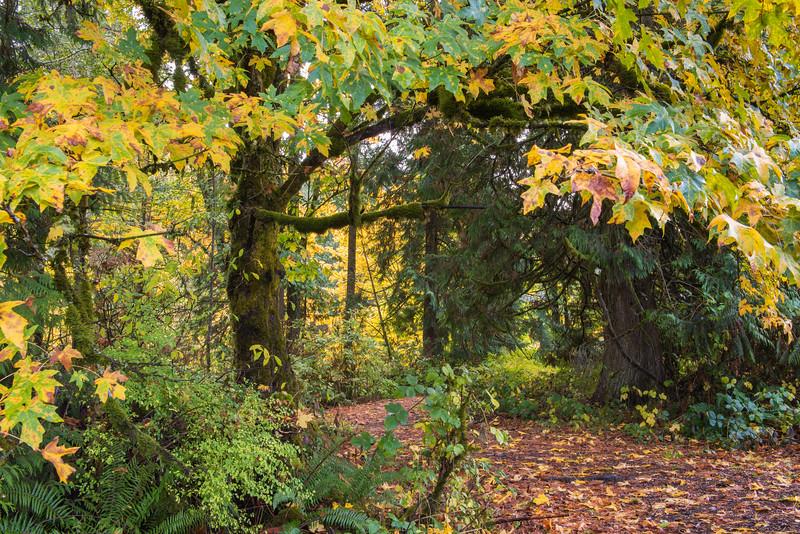 Fall color at Victor Falls in Bonney Lake, WA