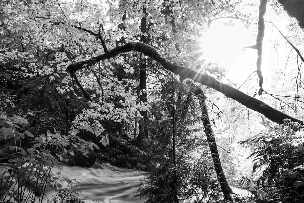 Shots from Victor Falls in Bonney Lake, Washington