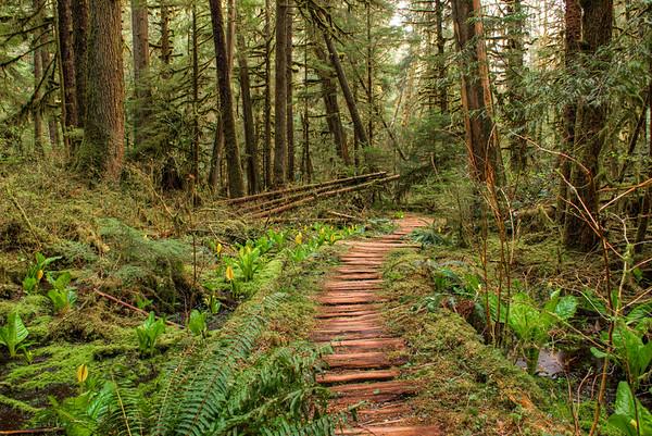 Trail Through The Rain Forest Loop