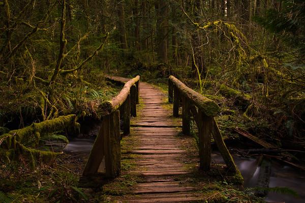 Rain Forest Loop
