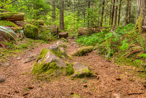 Naches Trail Federation Forest