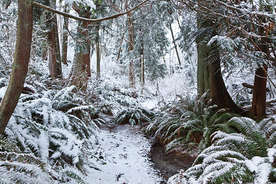 Kingston scenery following winter snow storm. Hiking trail.