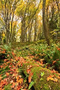 Quiet Place Park in autumn