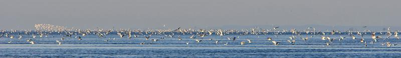 Birds on Puget Sound near Point No Point lighthouse