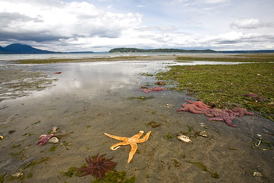Kitsap Peninsula minus tide