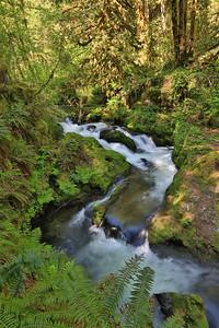 Maple Falls