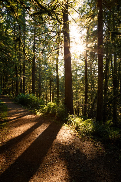 Darrington, Boulder River - Setting sun peeking through forest on trail with shadows