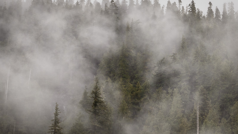 Verlot, Perry Creek - Forest appearing through the fog