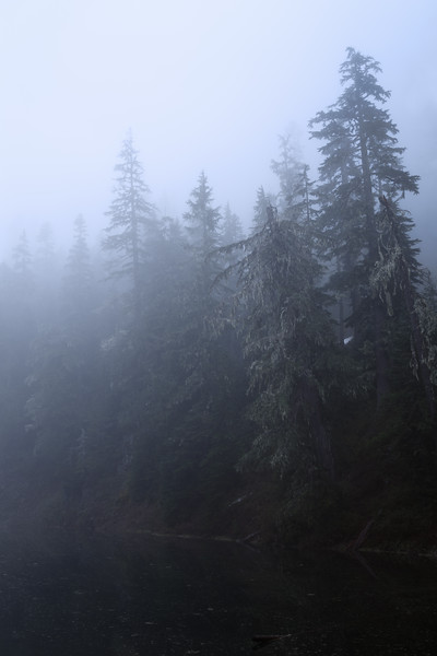 Verlot, Independence Lake - Foggy forest along the shore of the lake