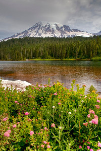 The only wildflower bush I found on the bank of Reflection Lake along with a snow bank behind it!
