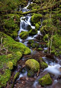 Lovely Washington moss!
