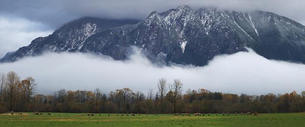 Mt Si Elk 20 x48