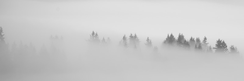 January 17th, 2017 4:38 PM fog moved up from the valley