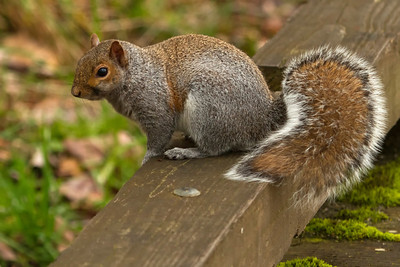 I know, it's not a bear or an elk, but who doesn't like the bushy tail of a squirrel?