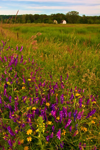 Love the wildflowers!