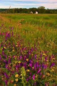 Love the wildflowers!