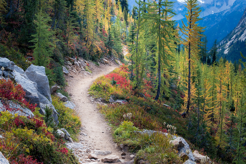 Rainy Pass, Cutthroat Pass - Trail passing through boulders and entering larch grove