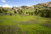Pasayten, Horseshoe Basin - Meadows at Sunny Pass