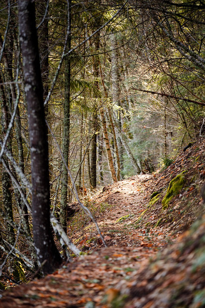 North Cascades, Ross Lake - Trail with fallen leaves in the sun