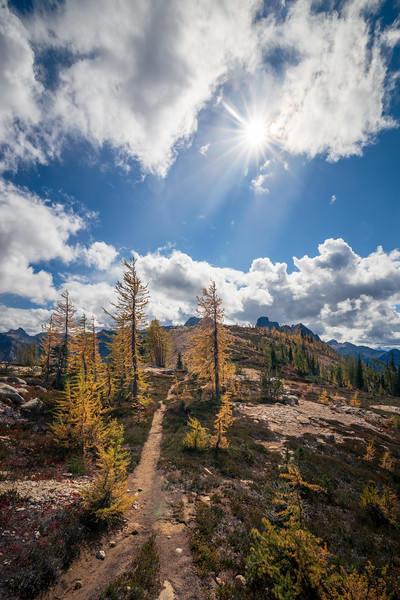 Rainy Pass, Cutthroat Pass - Trail passing through larch trees with sun star