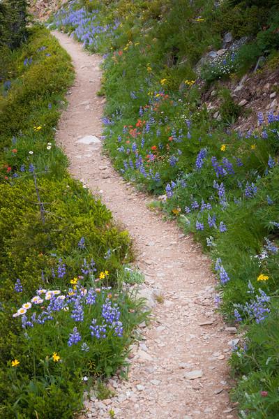 Harts Pass, Tatie Peak - Trail winding through colorful wildflowers