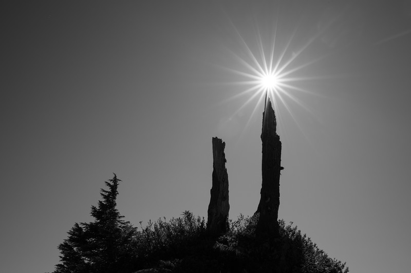 Whatcom, Artist Point - Two old snags and a sun star, black and white