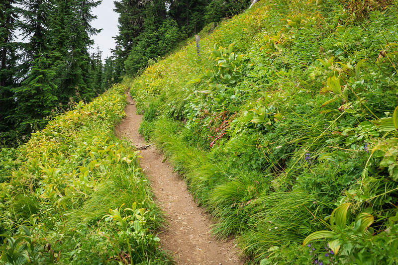 Whatcom, Winchester Mountain - Trailscape with lush greenery in the fog