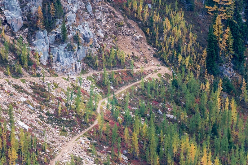 Rainy Pass, Cutthroat Pass - Distant switchback through larch trees and red huckleberry bushes