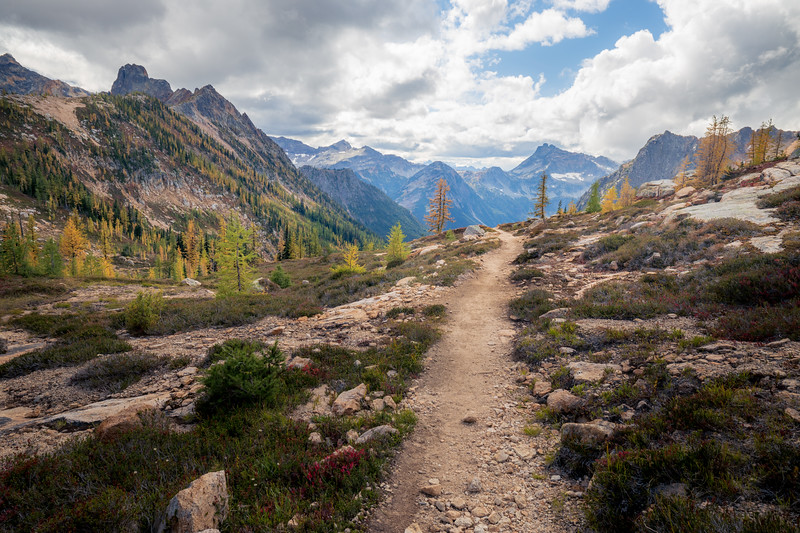 Rainy Pass, Cutthroat Pass - Bend in trail leading towards valley view with two larch trees guarding trail, wider