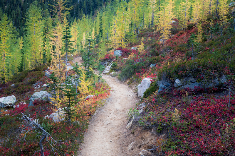 Rainy Pass, Cutthroat Pass - Trail winding through boulders with larch and red huckleberry bushes