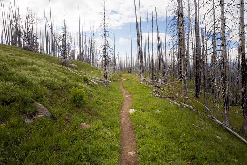 Pasayten, Horseshoe Basin - Trail in meadow through burned forest