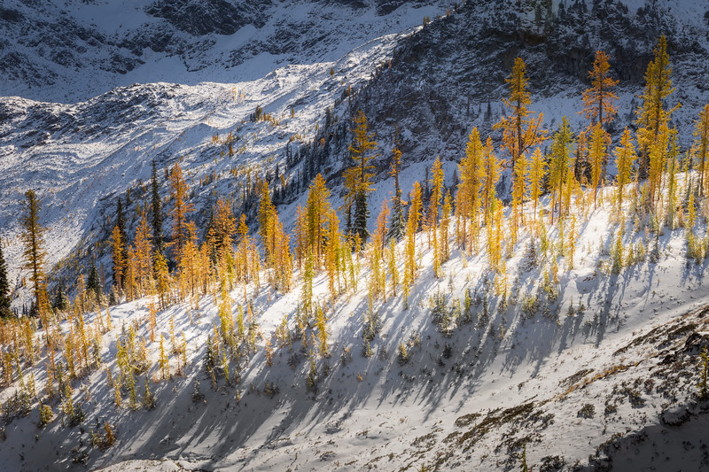 Rainy Pass. Maple Pass - Dense shadows and larch on a small ridge in the snow