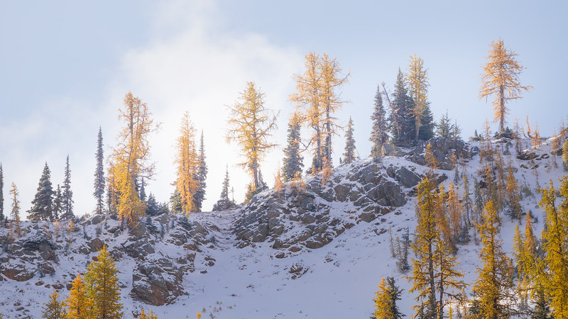 Rainy Pass. Maple Pass - Larch on the edge of a snow-covered ridge in early morning light