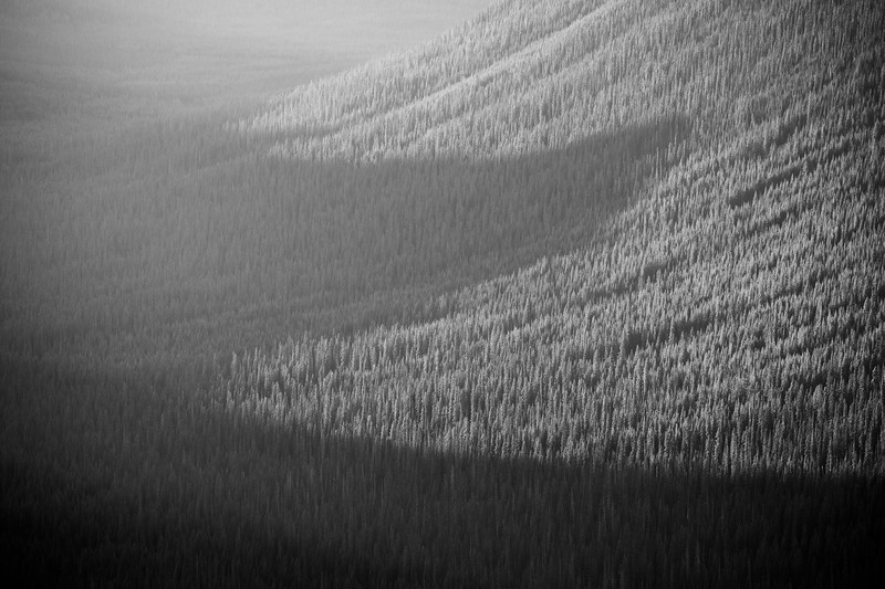 Harts Pass, Slate Peak - Shadows of peaks on forest, black and white, tighter
