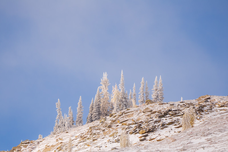 Rainy Pass. Maple Pass - Ice covered trees on a ridgeline in the snow